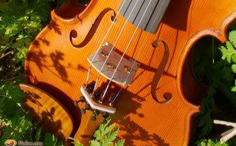 chevalet de violon
